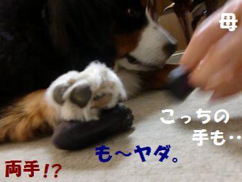 も~あきたの~!!