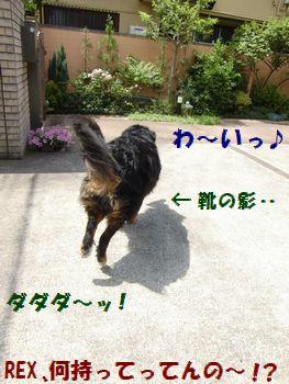 お庭も走っちゃうよ~!!