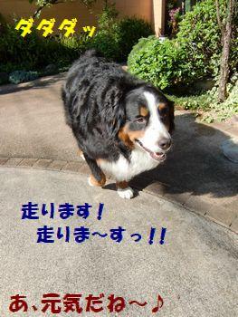 走るど~!!