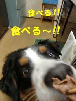 食べるとも~!!
