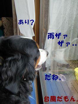 雨すんごくない??