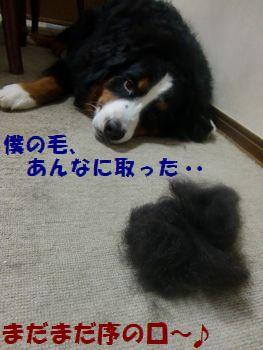勝手に僕の毛とって・・・!