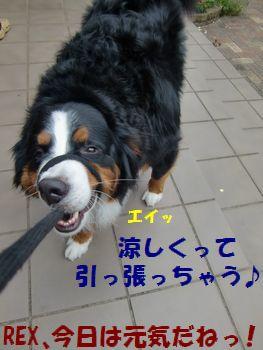 リードひっぱろ?り~ど~!!
