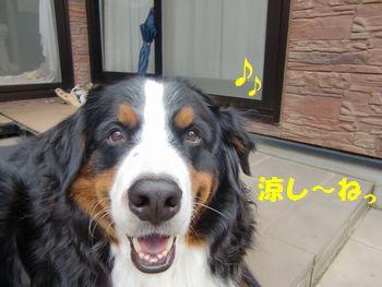 今日もいい日なのだ~!!