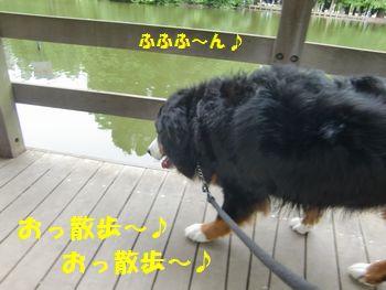 おっ散歩~!おっ散歩~!!