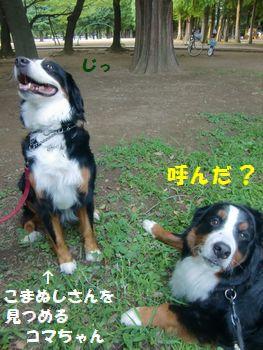 コマちゃんと2ショットなの!!