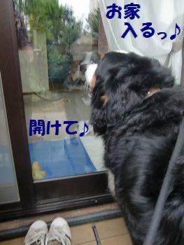 僕お家入るの~!