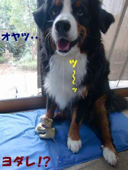 ヨダレたれちゃうよ~!