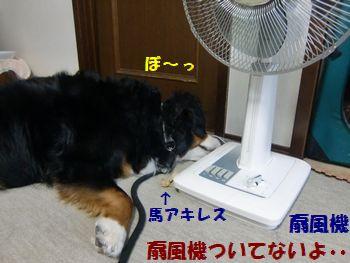 涼しくない・・・・。