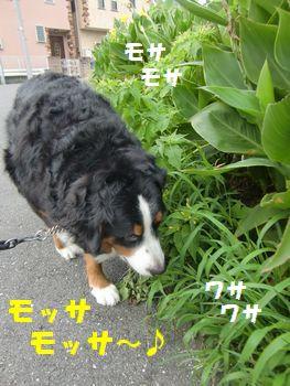 モッサモッサ~♪好き~!