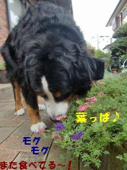 葉っぱっぱ~♪