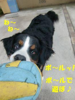 やっぱボール!!