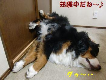 足きついけど眠いの~・・・。
