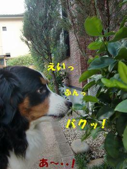 取っちゃえ~!!