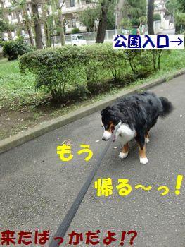 お散歩もういいよ~!!
