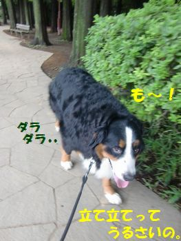 ダラダラ歩いてやる~!!