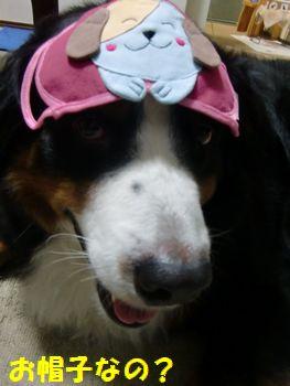 お帽子!?