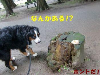 なんかあったよ!?白いの!!