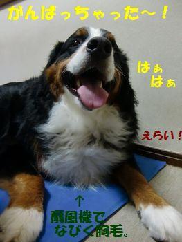 ぼく、がんばった~!!!