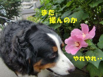 お花といつも撮んだもん・・・。