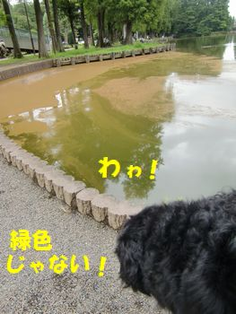 おうどいろ~!!!