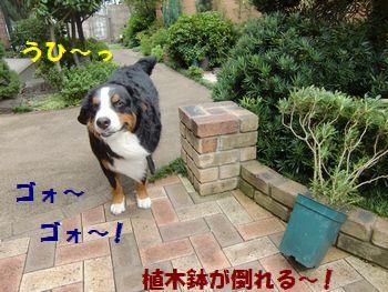 うわわ・・風強っ!!