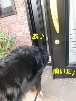 開いたよ開いたよ~!!