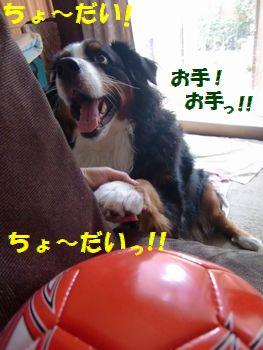 ちょ~だい~!!