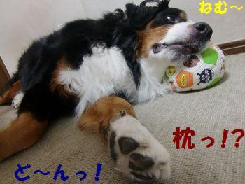 まくらまくら~僕のまくら~!!