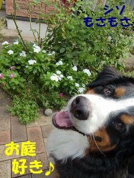 お庭が好きなの!