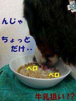 んじゃ試しに食べてみるよ・・・。