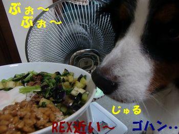 もう食べていいんじゃない~!?