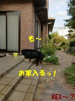 も~!お家入るの~!!