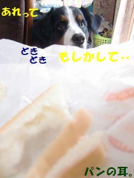 あれってパンの耳の山じゃない~!?