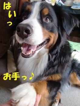 はい~!はい~!!お手!!