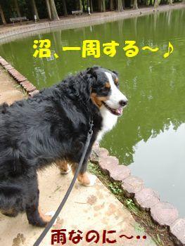 沼歩く気分~♪