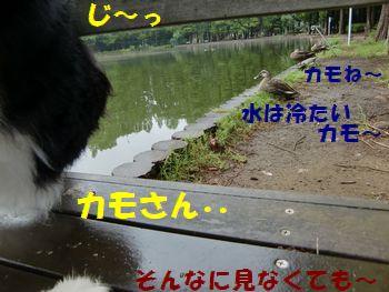 カモさ~ん!ねぇってば~!!