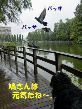 鳩さんもいっぱいいるの~!