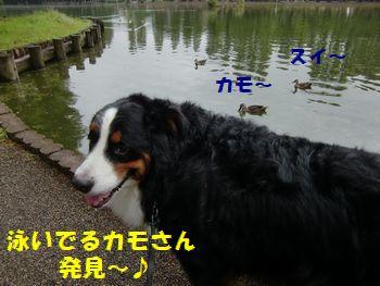 泳いでる泳いでる~!!