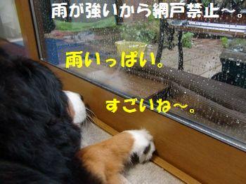 雨がすご~いの!!