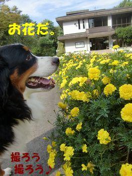 お花あるよ~。黄色いの。