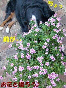 お花と撮るって・・・前見えない!!