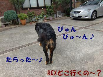 あっちにも走る~!!びゅ~ん!!