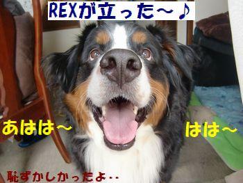 REXが立った!立った~!!