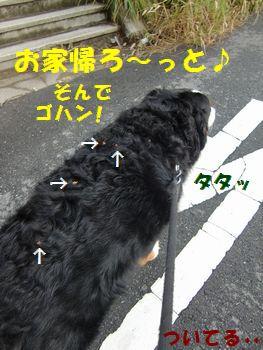 お家帰ってゴハンだ~!!