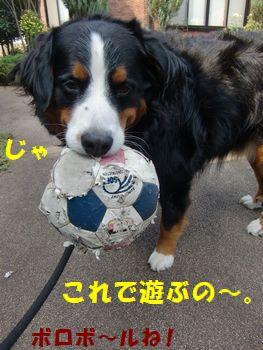 んじゃ~このボールで遊ぼかな~。