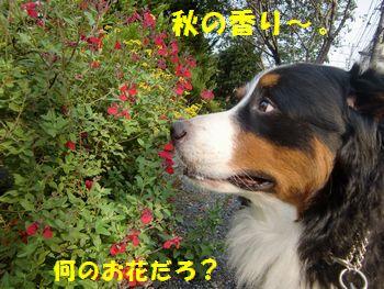 秋の香り~!