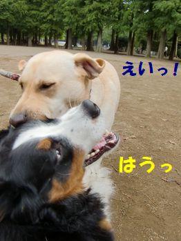 今度はマロンちゃんが来た~!!