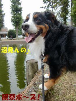 沼を見るんだよ~!