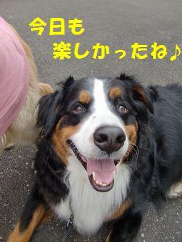 すんごく楽しいお散歩だね~!